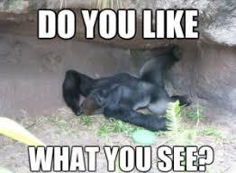 Funny Gorilla Meme - gorilla meme funny collection of gorilla memes