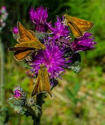 imágenes asombrosas naturaleza naturaleza mariposa asombrosas imagen de archivo imagen de relaje
