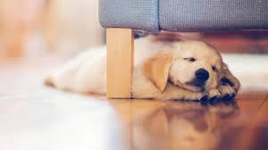 cute dog christmas wallpapers cute dog wallpaper qygjxz