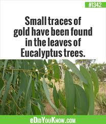 small traces of gold been found in the leaves of eucalyptus