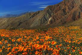 anza borrego anza borrego desert state park borrego springs ca san diego