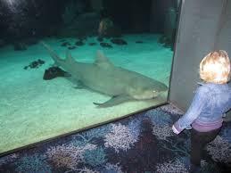 the craftinomicon shark plush idolza