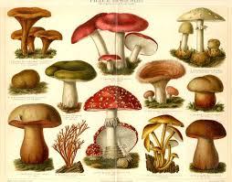 Are Backyard Mushrooms Poisonous The Weirdest Baby Names Poisonous Mushrooms Mushroom Fungi And