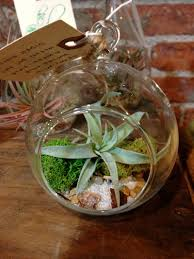 holiday terrarium ornaments u2013 the buzz blog diane james home