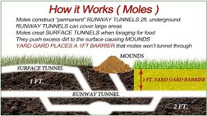 How To Get Rid Of A Skunk In Your Backyard How To Get Rid Of Moles In Your Yard Yard Gard Animal Repellent