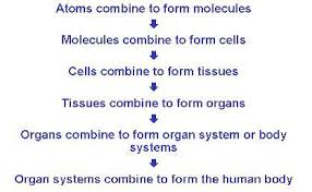 understanding the basic anatomy and physiology of the human body