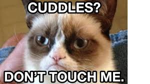 Internet Meme Cat - bbc culture grumpy cat hollywood icon