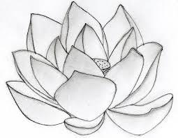 drawn lotus pretty flower pencil and in color drawn lotus pretty