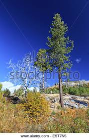 sparse trees on a high plateau on the california side of the