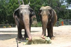 Orlando Zoo And Botanical Gardens Florida Zoo Mourns Of Third Oldest Asian Elephant On Record