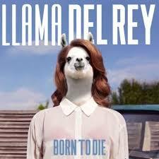 Llama Meme - the funniest llama memes llama del rey kendrick llama and more