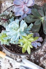 succulent garden care archives succulent gardening