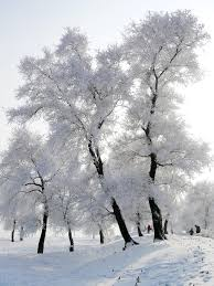 frosty trees photos hd wallpapers pulse