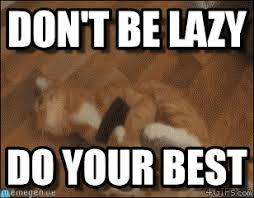 Lazy Meme - don t be lazy cleaning cat meme on memegen