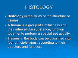 Anatomy And Physiology Cells And Tissues Anatomy U0026 Physiology Lesson 4 Histology Histology Is The Study