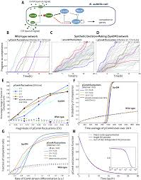 stochastic simulation of biomolecular networks in dynamic environments