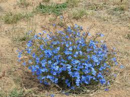 native australian plants native plants archives trevor u0027s travels trevor u0027s travels