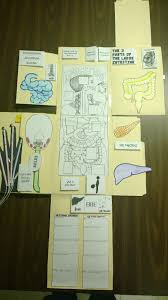 Apologia Human Anatomy And Physiology Blood And Guts U2013 Lapbook Lesson 4 Human Anatomy Homeschool And