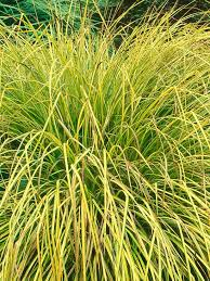 identifying plant types evergreen grasses and gardens