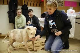 volunteer thanksgiving chicago safe humane chicago giving back good matters blog