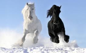 the meaning of the dream in which you saw horse
