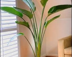 plant small indoor plants amazing cool house plants wonderful