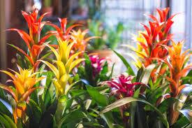 Plants Indoor by Roger U0027s Gardens U2013 Indoor Plants