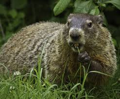 the science behind groundhog day