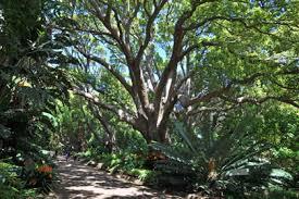 Kirstenbosch Botanical Gardens Kirstenbosch Sanbi