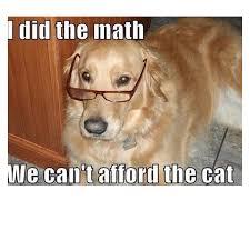 Meme Dog - 45 funny dog memes dog memes dog and animal
