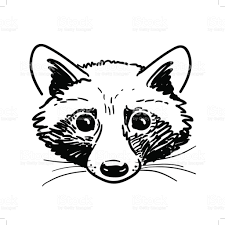 pen and ink raccoon head sketch stock vector art 678720002 istock