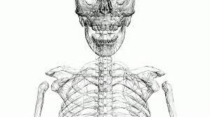 moving of 3d skeleton skull anatomy human medical body biology