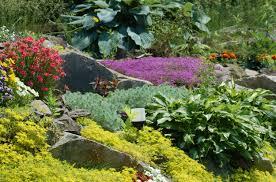 best shrubs that bloom all year garden front yard landscaping
