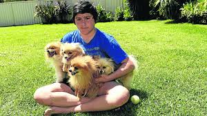 Dog In The Backyard by Brown Snake Kills Family Pet In Metford Backyard Photos The