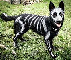 Halloween Costumes Large Dogs 33 Pets Halloween Costumes Flaunt Unique Halloween Style
