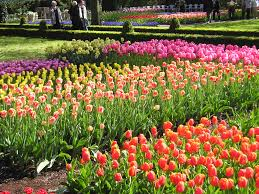 Photos Flowers Gardens by Beautiful Flower Garden Decorating Clear
