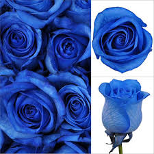 blue roses offline roses tinted blue 100 stems sam s club