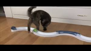 asia the cat chasing ball on track youtube