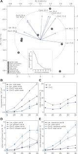 automated quantitative histology reveals vascular morphodynamics