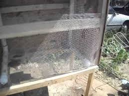 Backyard Quail Pens And Quail Housing by Quail Pen Setup With Nesting Box Added Youtube