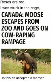 Moose Meme - roses are red i was stuck in the cage canada moose escapes from
