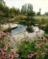 Natural Backyard Pools by Best 20 Swimming Ponds Ideas On Pinterest Natural Pools