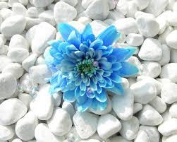 blue flower blue flower wallpapers hd wallpapers id 5638