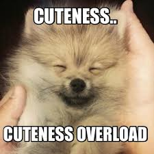 Cuteness Overload Meme - meme creator bosch service desk this is dave how can i help you