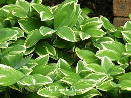 beautiful plants how to have beautiful plants u2026 even when you u0027re away from home