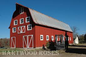 The Red Barn Austin Hartwood Roses Hartwood Roses Virtual Open Garden Day Tour
