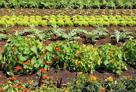 how to start a vegetable garden in nevada u2013 tips for finding the