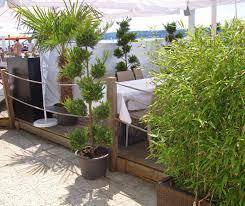 pflanzen f r balkon uncategorized ehrfürchtiges sichtschutz pflanzen pflegeleicht
