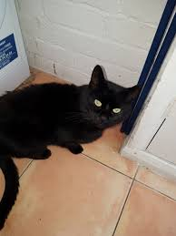 cat for free to a good home barnsley south yorkshire pets4homes
