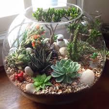 glass terrarium yourcacti